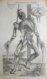 Vesalius: De Humanae Corporis